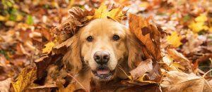Puppy photo 1
