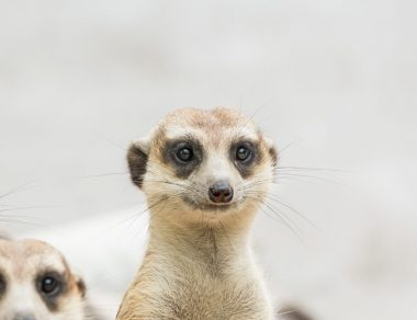 https://foragerfunds.com/news/the-meerkat-feasting-on-iselect/